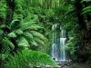 Réserve tropicale : La jungle lumineuse