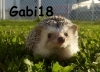 gabi18 - joueur Tropicstory
