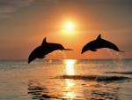 dolph y delia - Dauphin