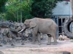 Éléphant elephant -  (0 mois)