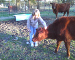 Rosella - Vache (10 mois)